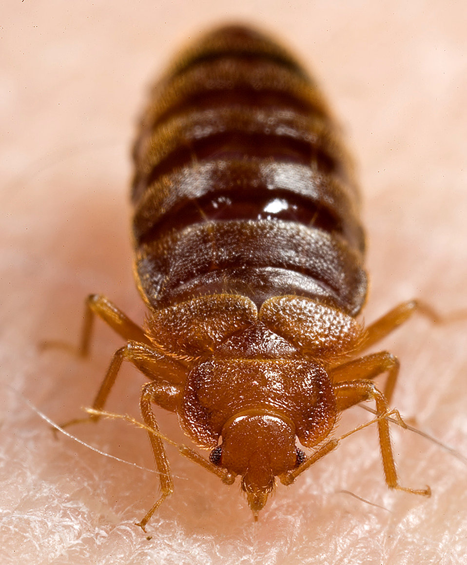 bed bug removal Gravesend, Northfleet, Meopham